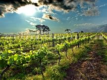 3. Stellenbosch Winelands Tour