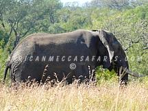 3. Hluhluwe-Imfolozi Safari