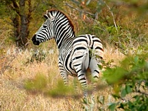 6. Cape Town Day Safari