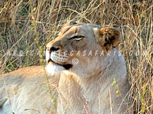 TIER 3 - BEST OF SOUTH AFRICA, VICTORIA FALLS & CHOBE