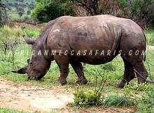 5. Pilanesberg National Park Safari & Sun City Tour